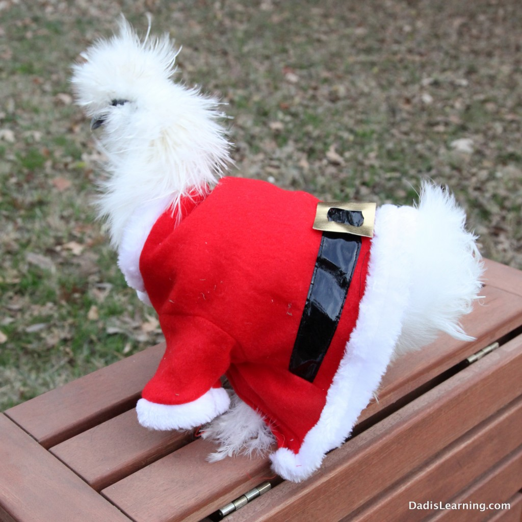 Chicken Santa Suit