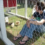 The chickens are a big part of our gardening.  My wife visiting the hens when they were young.
