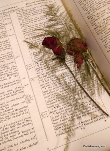 flowers pressed in old bible